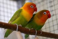 Reproductive Behavior of Animals