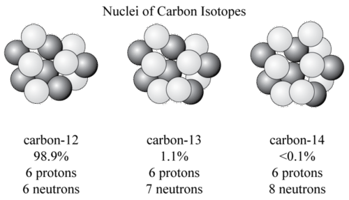 Nuclei of carbon isotopes