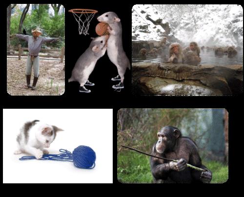learned behavior ( read ) | biology | ck-12 foundation
