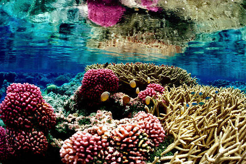 Coral reefs in the ocean teem with life