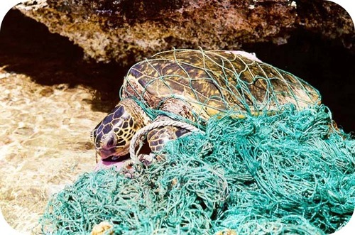 Marine trash such as nets and plastic packaging can entangle animals