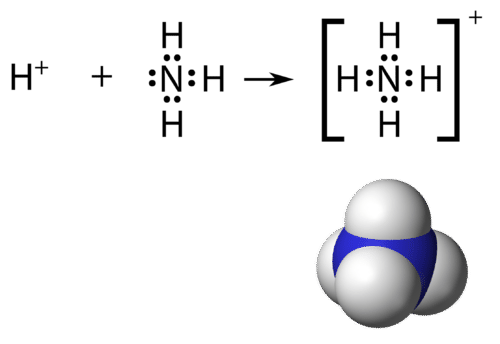 Structure of the ammonium ion