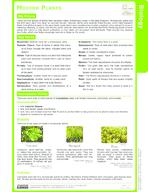 Modern Plants Study Guide
