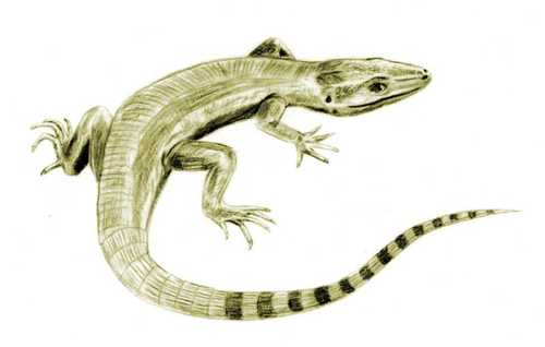 An early, reptile-like amniote