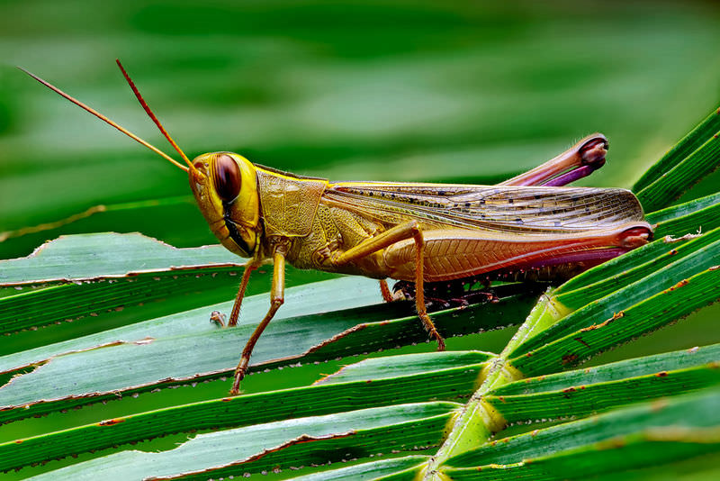 Insect Structure and Function ( Read ) | Biology | CK-12 Foundation