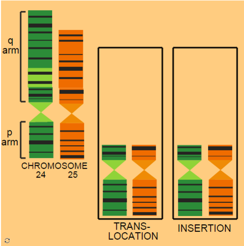 Inter-Chromosomal Mutations