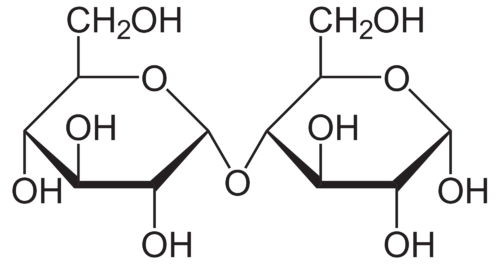 Structure of the disaccharide maltose