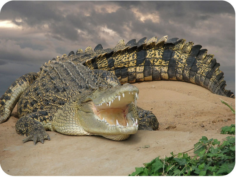 Reptile Structure and Function ( Read ) | Biology | CK-12 Foundation