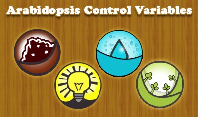 Arabidopsis Control Variables