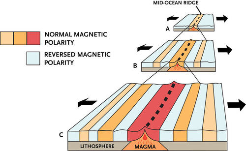 Scientists Found That Magnetic Polarity In The Seafloor Was Normal At Mid  Ocean Ridges But Reversed In Symmetrical Patterns Away From The Ridge  Center.