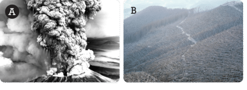 Mt. St. Helens eruption and aftermath