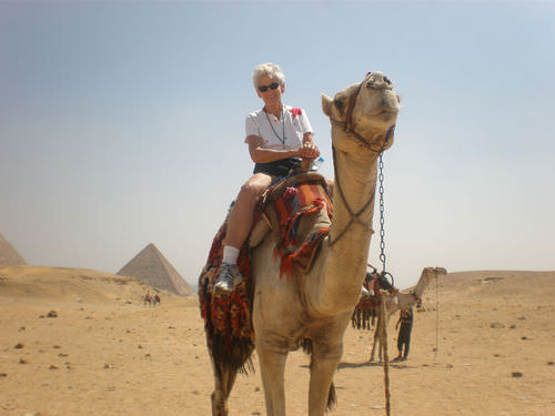 This camel provides transportation in Egypt