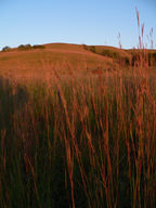 The Flint Hills contain some of the largest remnants of tallgrass prairie habitat remaining in North America