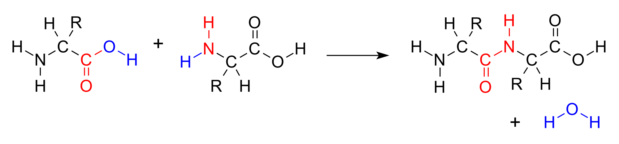 Structure of a generic condensation reaction