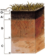 Diagram of the soil horizons