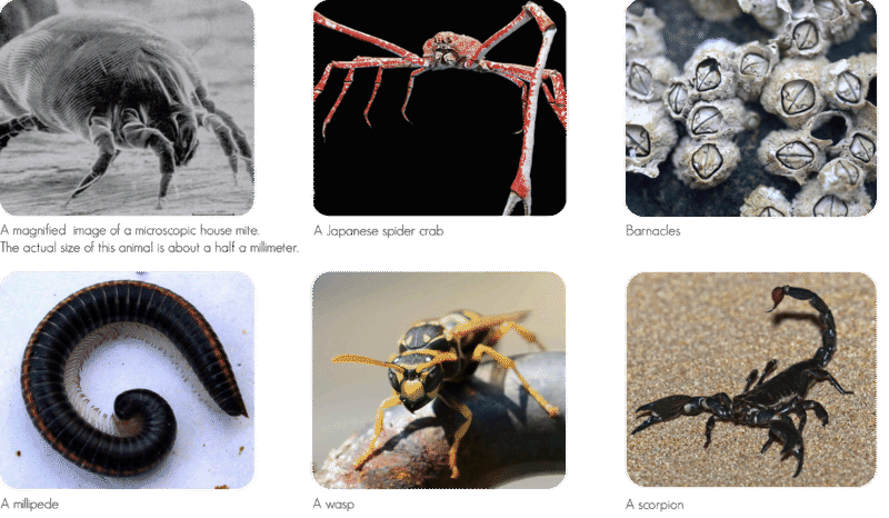 Arthropod diversity: dust mite, spider crab, barnacles, millipede, wasp, scorpion