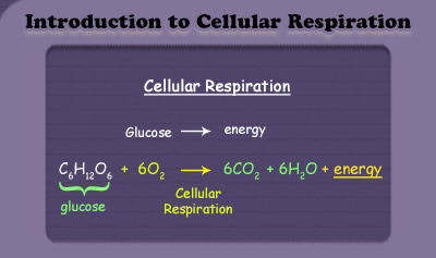 Introduction to Cellular Respiration