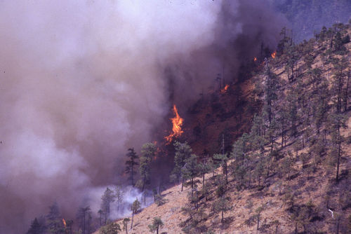Wildfires generate particles that contribute to air pollution