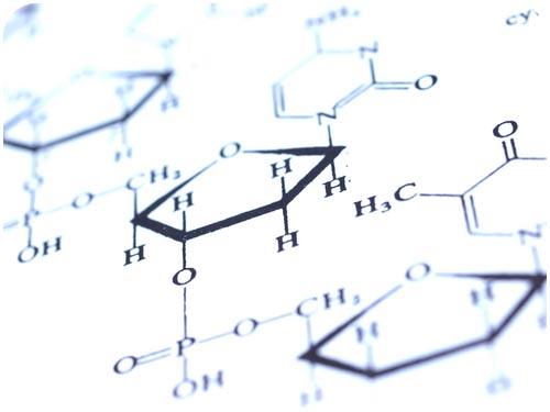 Biochemical Reactions