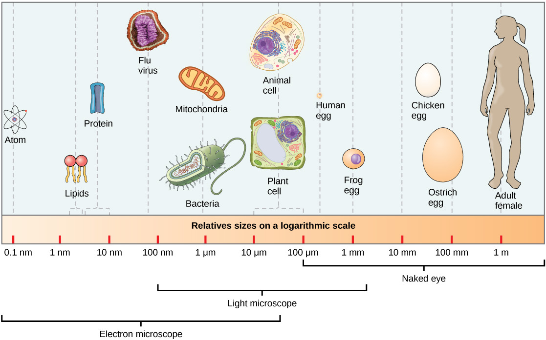 2 3 A Cell is the Smallest Unit of Life – Environmental Biology