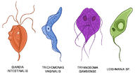 Protists and Human Disease
