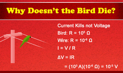 Ohm's Law and Why Birds Don't Die