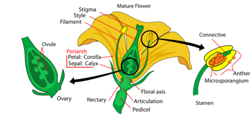 A complete flower has sepals, petals, stamens, and one or more carpels