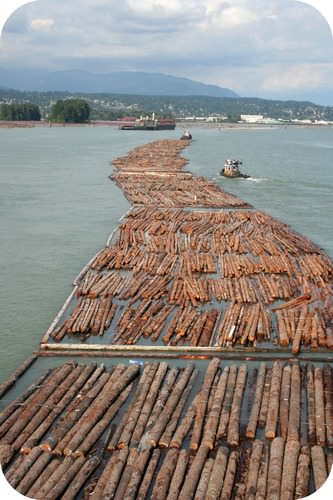 Logs floating in a river