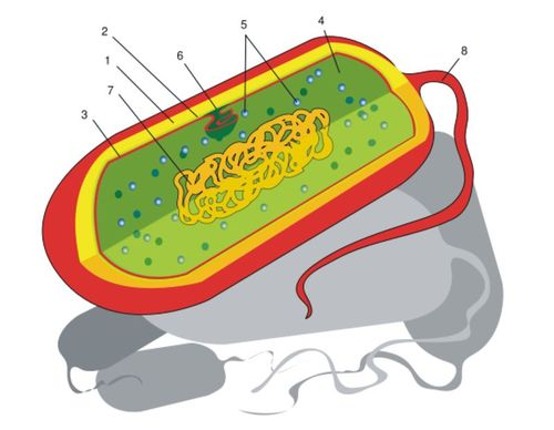 Parts of a prokaryotic cell
