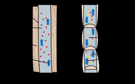 Four Types of Modern Plants | CK-12 Foundation Xylem Tissue Type