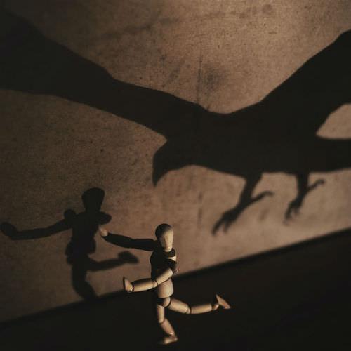 running from the bird shadow