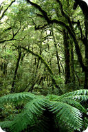 Ferns are common in the understory of the tropical rainforest