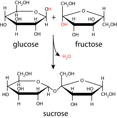 Condensation of glucose and fructose creates sucrose