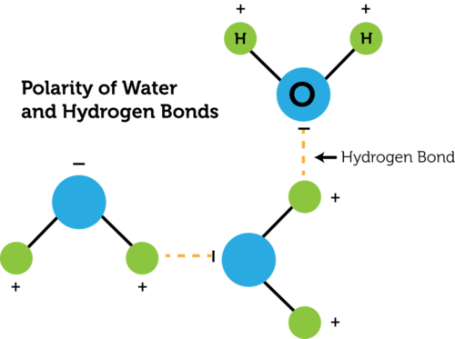 Hydrogen bonds between polar water molecules