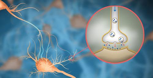 Axon signaling using exocytosis