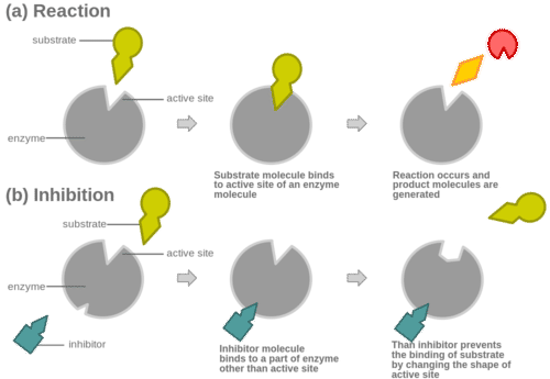 Diagram illustrating non-competitive inhibition