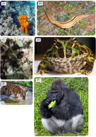 Overview of Animals