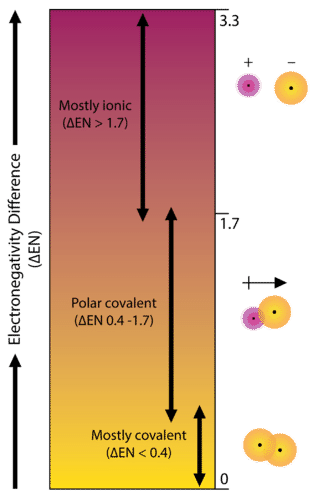 Electronegativity difference and whether the bond is covalent, polar covalent, or ionic
