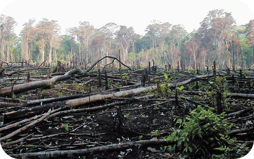 This forest in Mexico has been cut down and burned to clear forested land for agriculture
