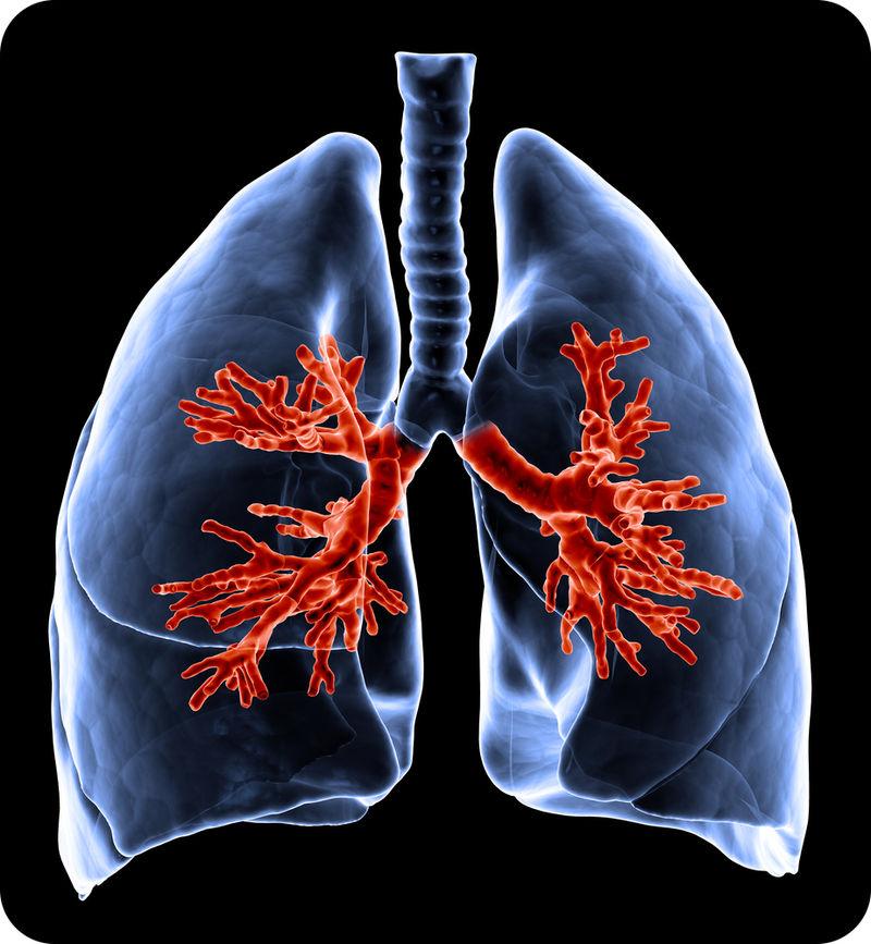 Respiratory System Organs