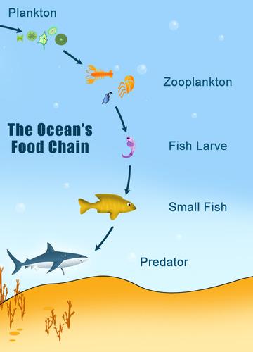 Marine Food Chains | CK-12 Foundation